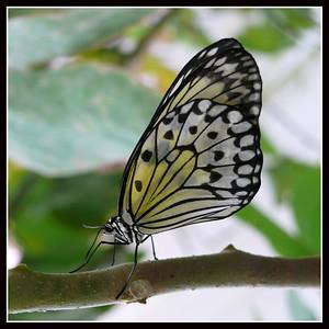 Butterflies Garden - Sassnitz (Germany)