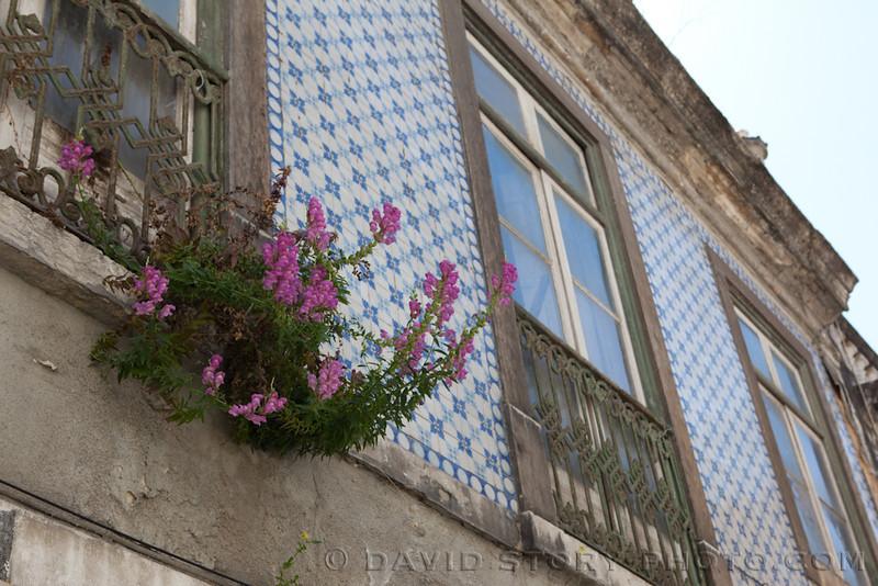 Flowers on tile. Lisbon, Portugal.