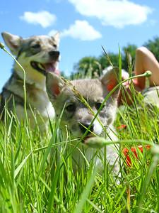 15 juni 2013 4e puppybezoek