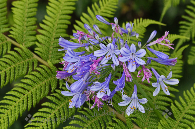 Flowers in the Ferns