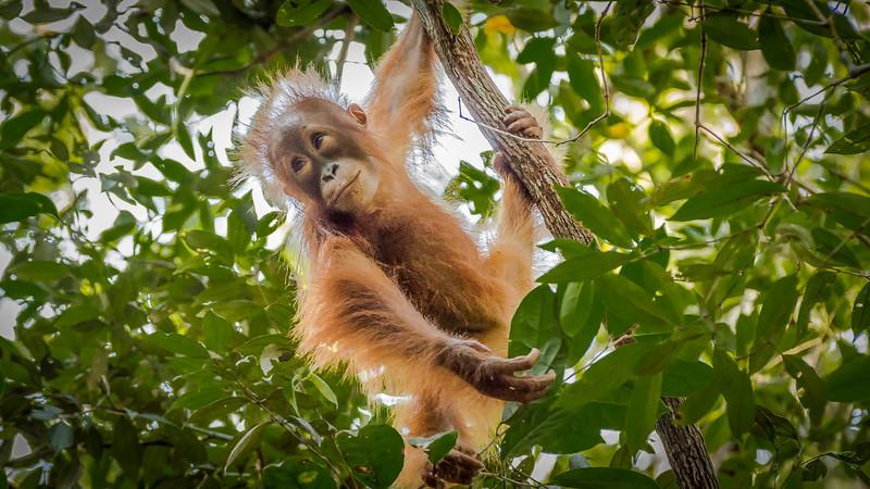 Borneo-2278.jpg