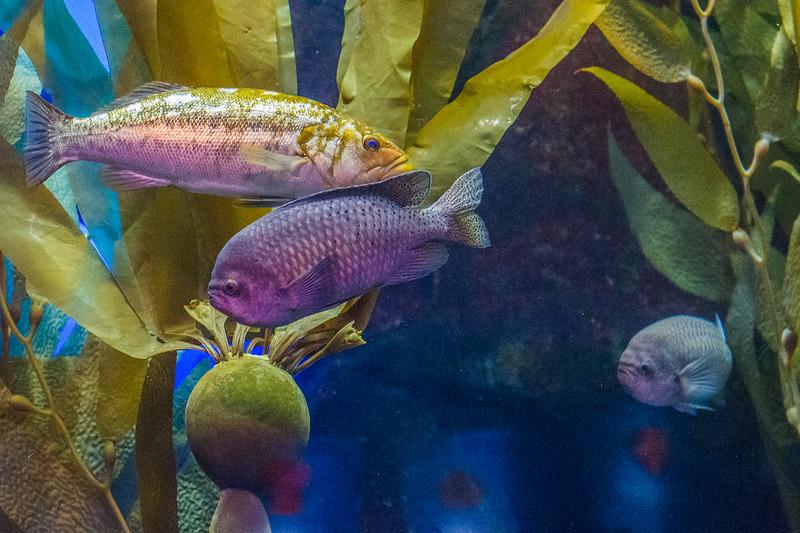 GA Aquarium with Linc, Ali & Abe-142.jpg