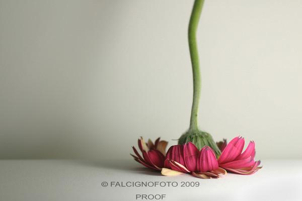 Face_Plant_Gerber1.jpg