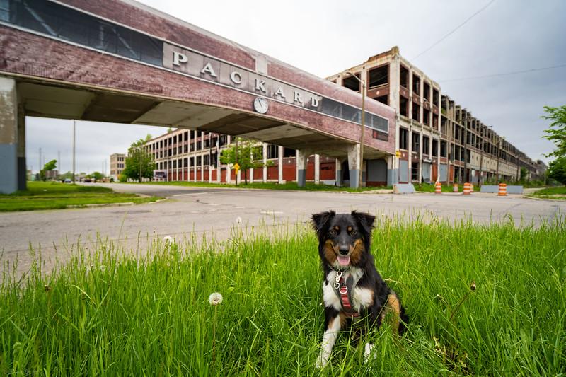 Packard Automotive, Detroit