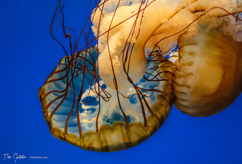 Jelly Fish -10.jpg