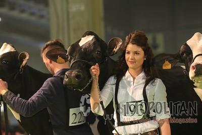 Holstein Cows Verona 2016