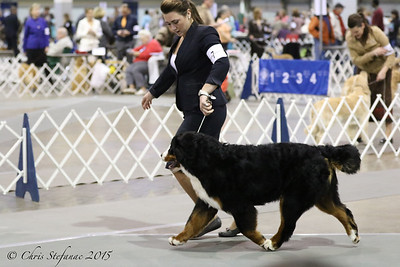 Middle Peninsula KC Dog Show-Sat 1/24/15