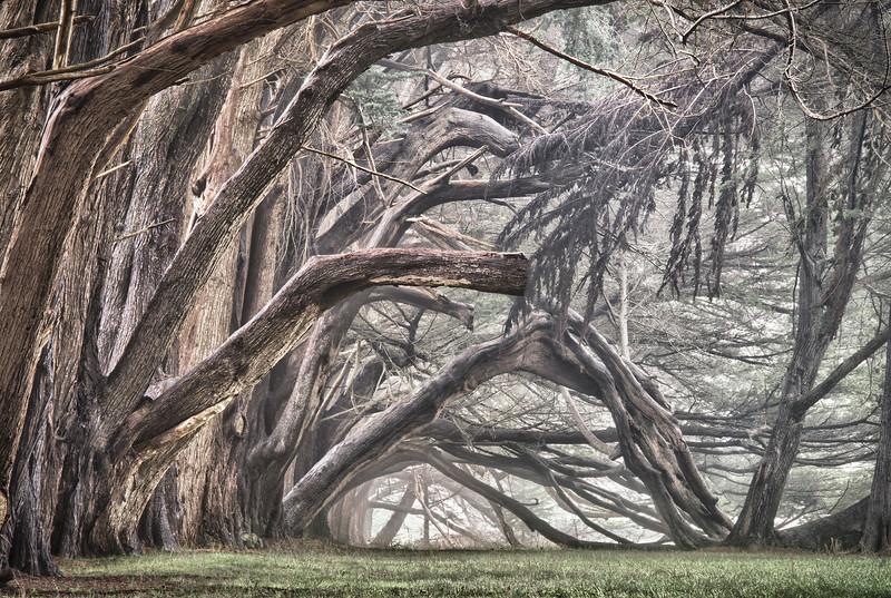 Cypress Archway, Sea Ranch, California