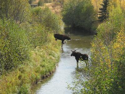 10.02.11_Magnificent Moose
