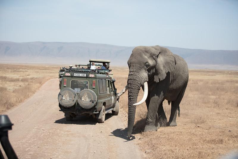Africa - 101816 - 7771.jpg