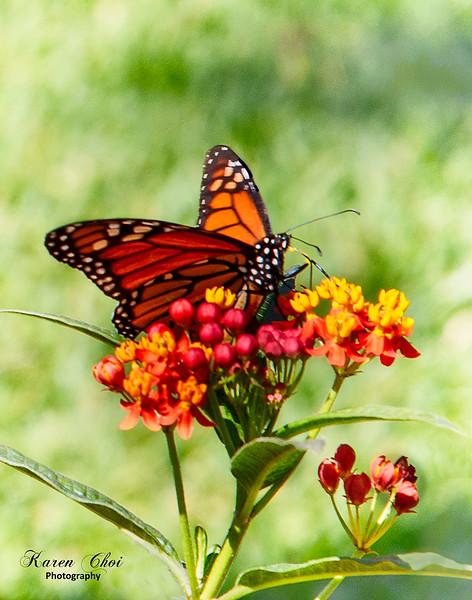 Butterfly 2 sm.jpg