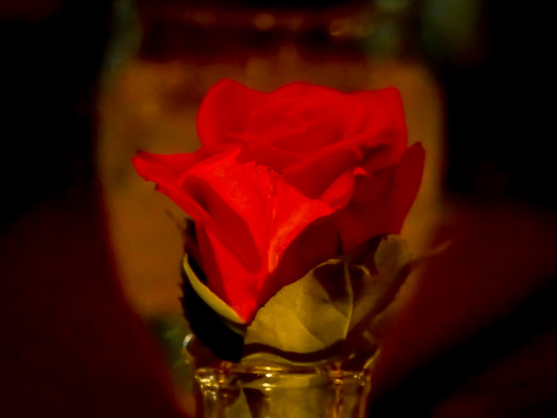 October 15 - Rose and a glass.jpg