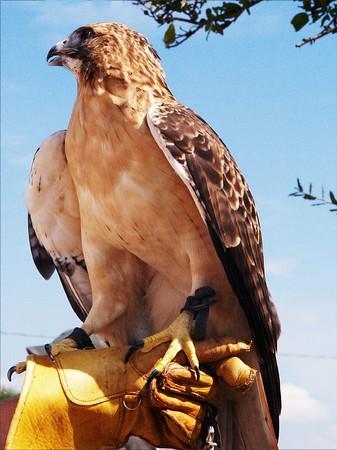 At TX Parks & Wildlife Expo (2004)