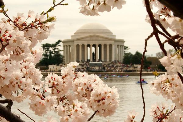 Cherry Blossom Festival DC, April 2007