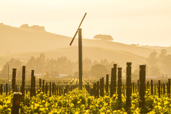 Vineyards - Spring