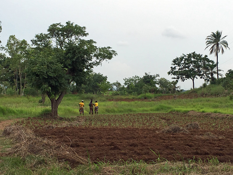 TChow farm 3.jpg