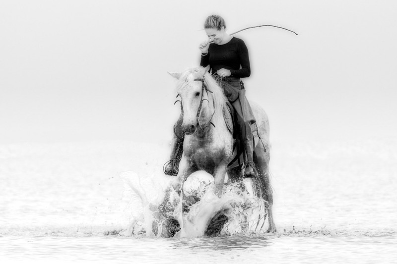 Camargue Guardian