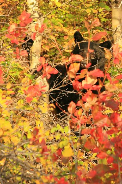IMG_9590 bear.jpg