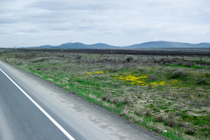 Washington's First Spring Wild Flowers