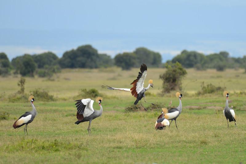 East Africa Safari 11.jpg