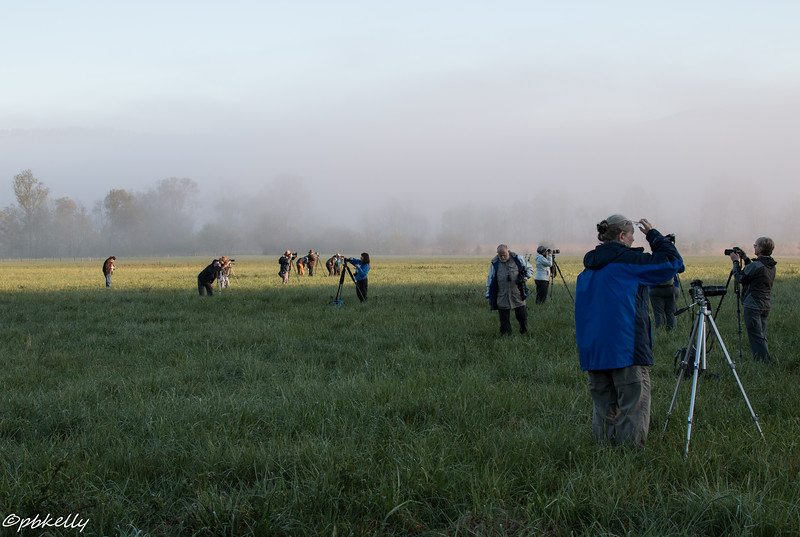 Sunrise in the fog at Cades Cove.  What are we doing standing knee deep in soaking wet grass?