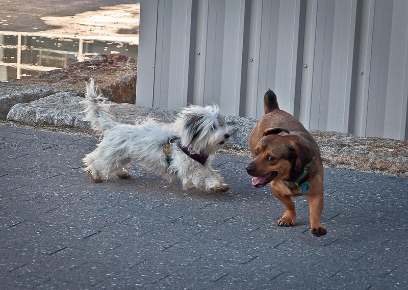 dog run24.jpg
