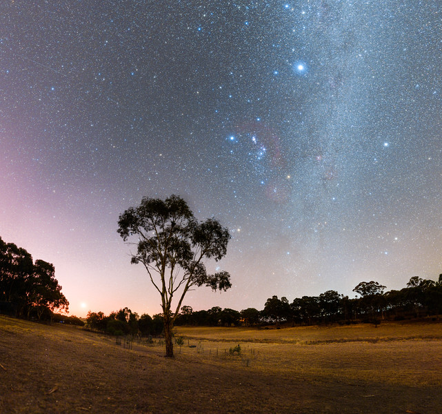 P4 West Tree Orion-10 Panorama.jpg