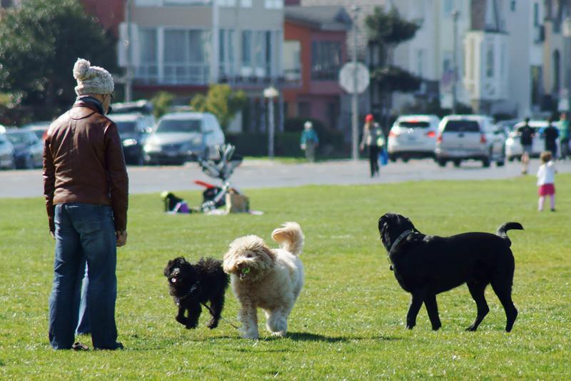 Dogs in play ref: 2a26854f-604f-482a-b9ba-7e7fbf183305