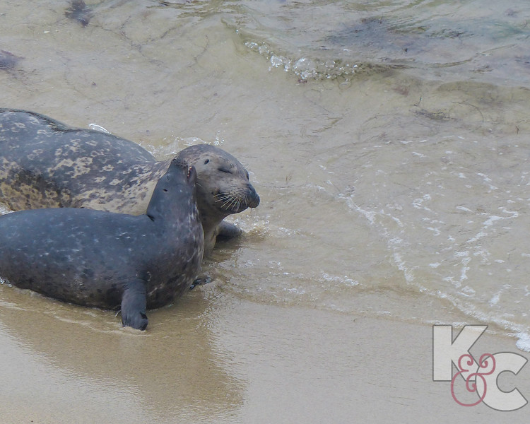 Mama Seal And Her Baby.jpg