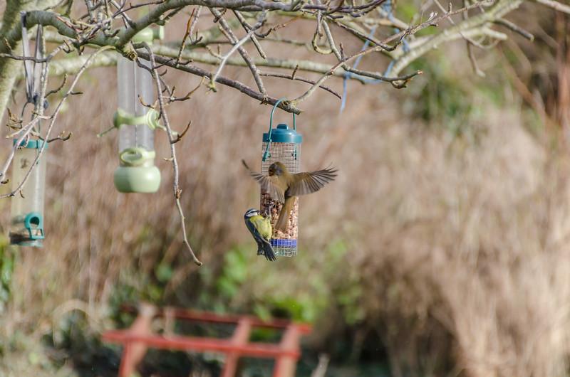 Birds 180118-62.jpg
