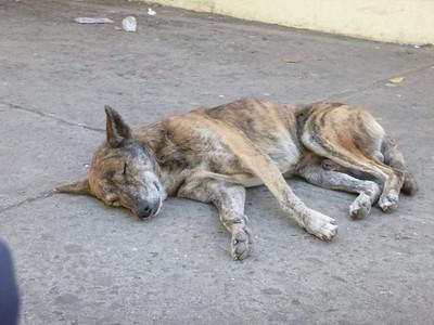 El Salvador - Santa Ana