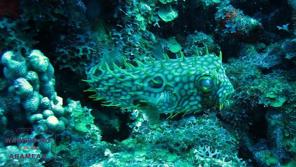 Underwater in Saba