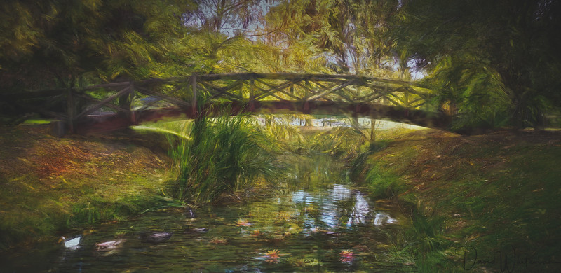 Lily Pond in Autumn