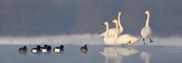 Bagna Słońskie / Slonsk wetlands