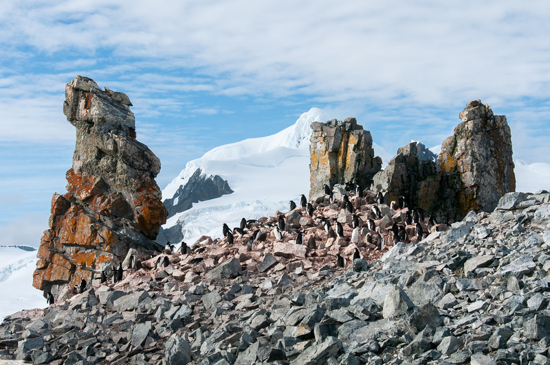 Colony of penguin in Half Moon Island, Antarctica
