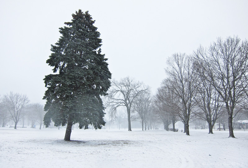 tree standing in snow and freezing fog