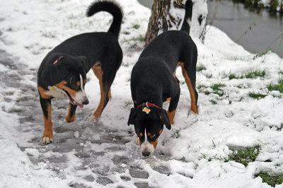Sheriff en Jesse in de sneeuw
