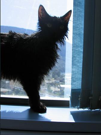 Cats, June 2005