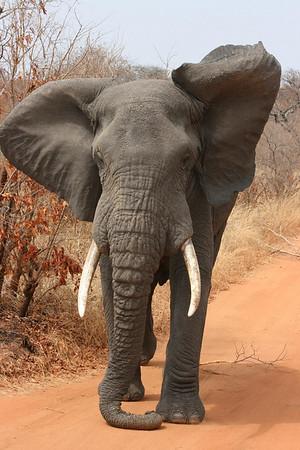 #2 Safari in Tarangire NP and Ngorongoro Crater, Tanzania 2008