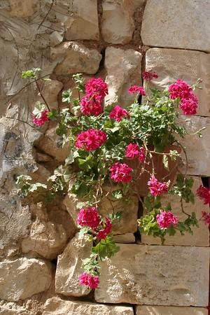 Safed / Цфат