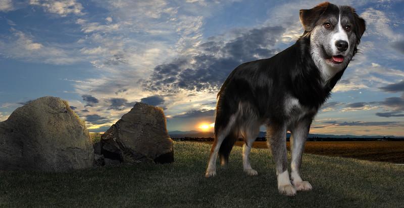 dog-colline2.jpg