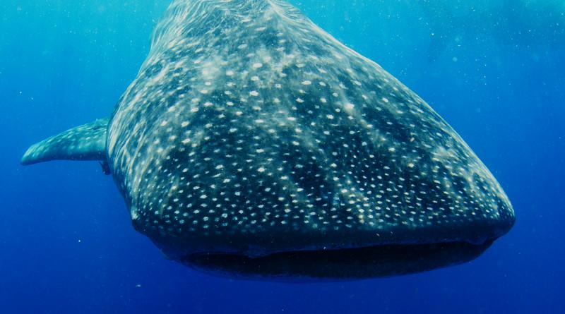 2014 Whale Shark - Cave Adventure-49.jpg