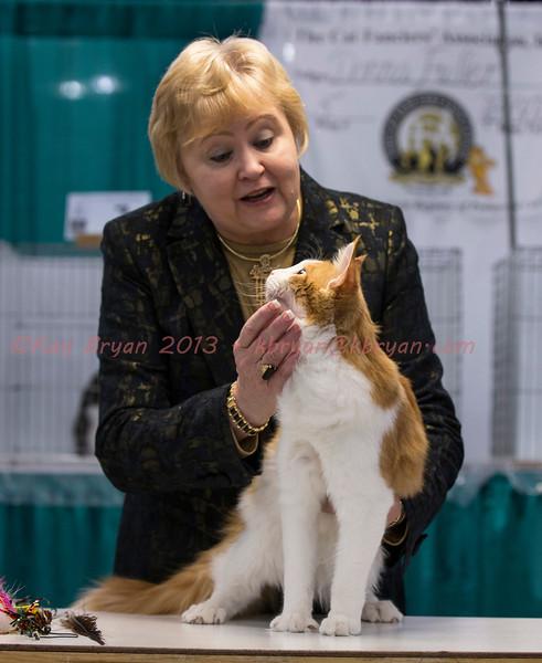 CatShow2014006_1.jpg