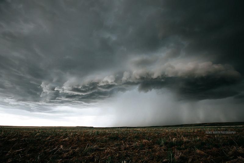 Storm_W0C5086WEB.jpg