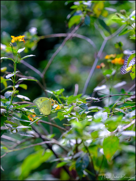 200104 KL Butterfly Park 37.jpg