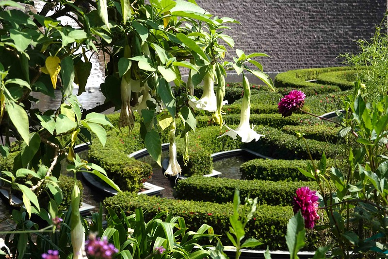 Flowers  CU Maze in BG.jpg