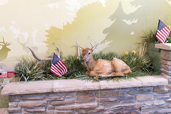 Elk Viewing in Benezette