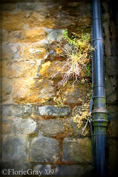 Flower in the Crannied Wall