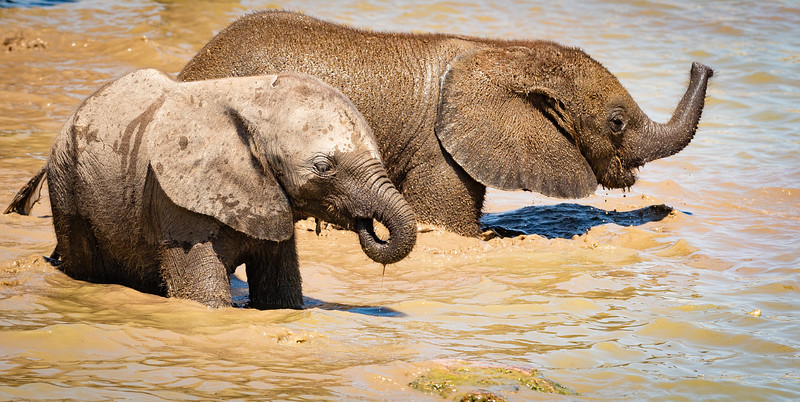 Elephant calves at Klein Okevi 13