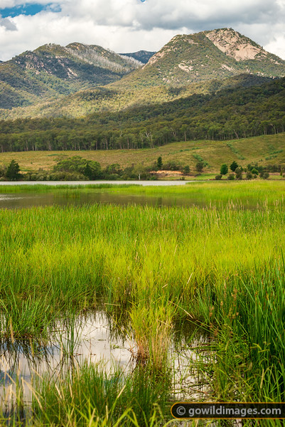 Mt Buffalo Ecosystem